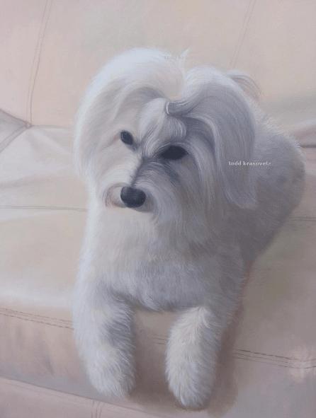 Pet Portraits by Todd Krasovetz